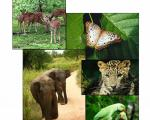 Kaudulla National Park Get Up Close and Personal With Elephants